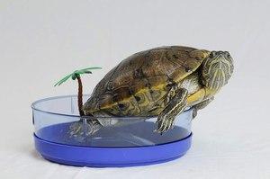 Уход за черепахами в домашних условиях