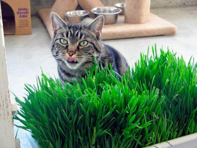 Зачем кошке нужна трава