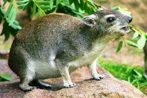 Список травоядных животных