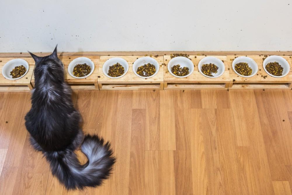 Сколько раз в день кормить кошку (кота): таблица нормы корма в день - Zverki.Click