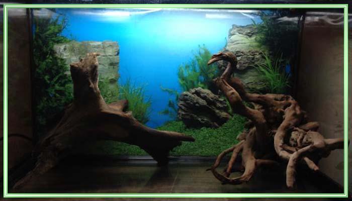 коряга для аквариума из виноградной лозы