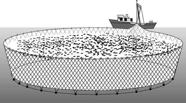 Схема ловли рыбы кошельковым неводом