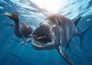 Описание различий и сходств костистых рыб и акул