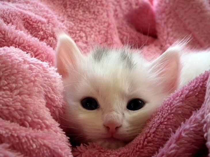 Котенок с ослабленным иммунитетом