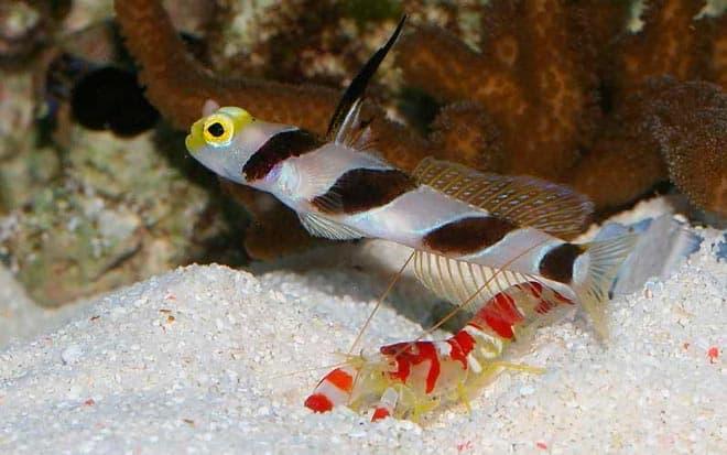 креветки и рыбы