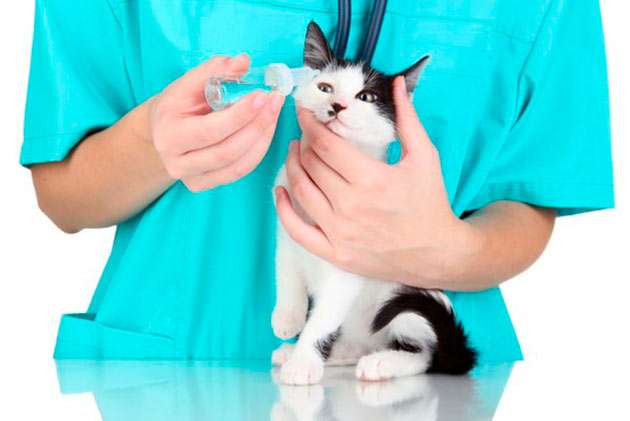 Только ветеринар сможет диагностировать и составить курс лечения для вашей кошечки