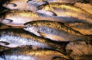 Лососевые рыбы названия