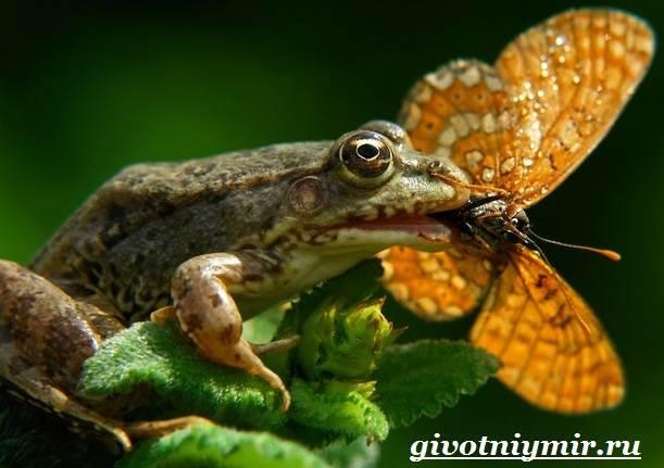 Лягушка-животное-Образ-жизни-и-среда-обитания-лягушки-6