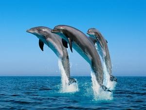 Разница между млекопитающими животными и акулами