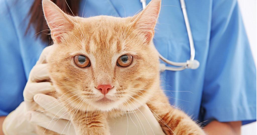 Мочекаменная болезнь у кота