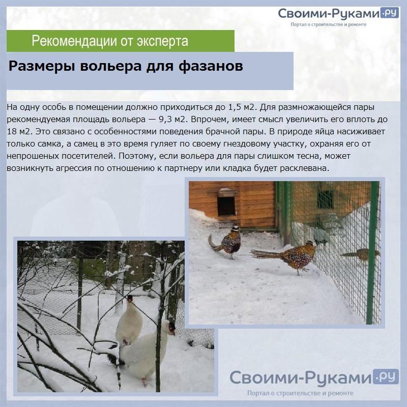 Размеры вольера для фазанов