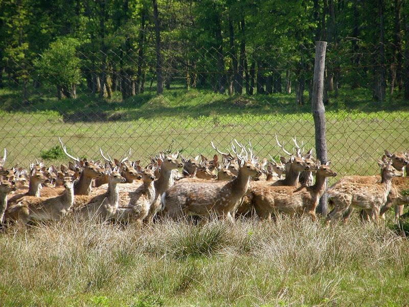 Ферма благородных оленей