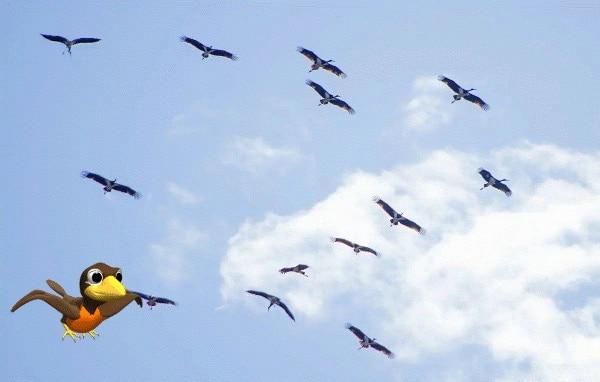 Какие птицы улетают на юг осенью последними