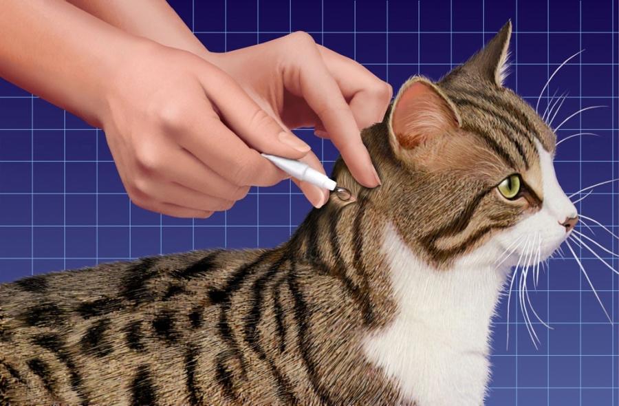 Нанесение препарата коту