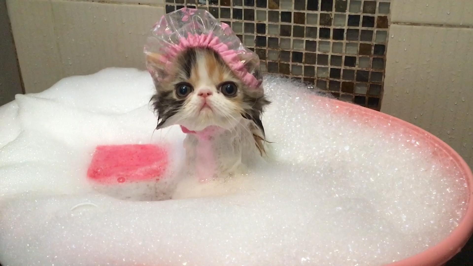Кошка купается