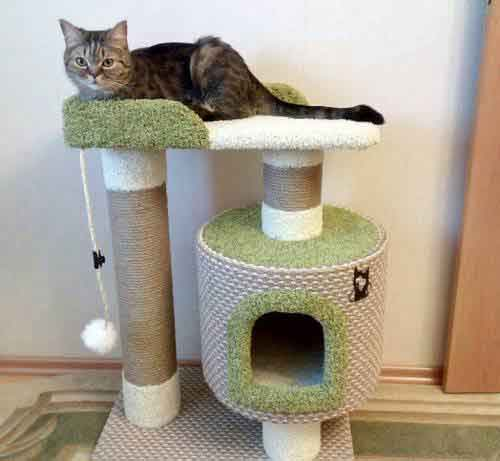 Как отучить кота драть обои обдирать углы