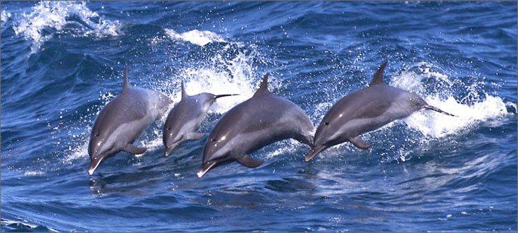 семья-дельфинов