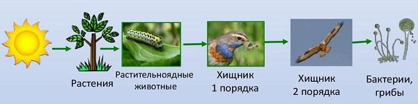 Многочисленных травоядных всеядных животных. Описание травоядных животных и их список
