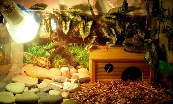 террариум для среднеазиатской черепахи