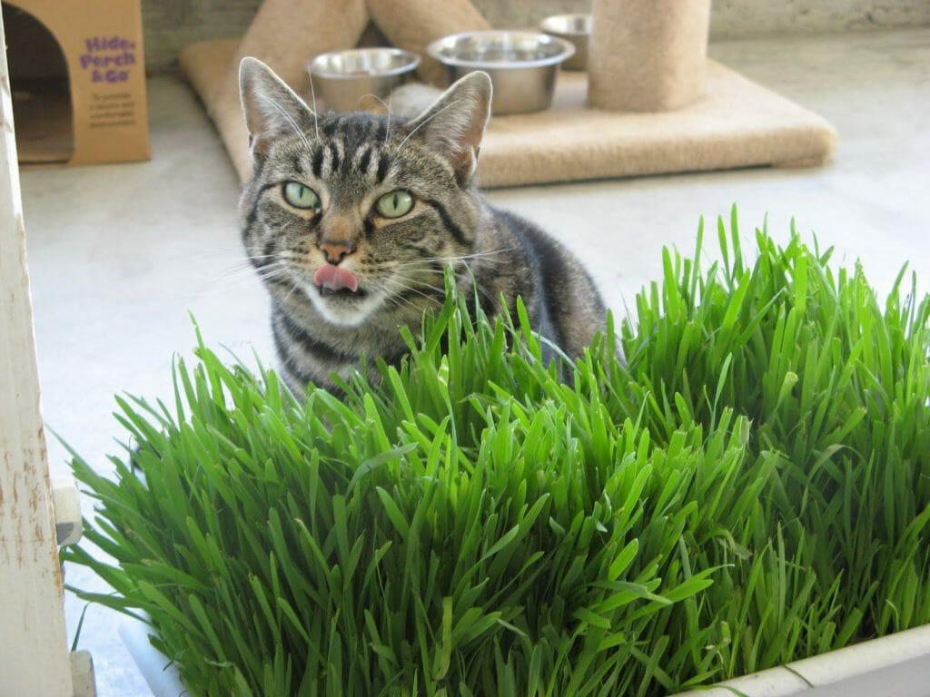 Кот выбирает траву.jpg