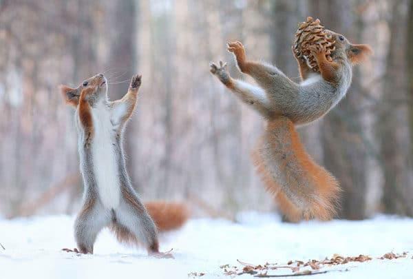 Белки играют