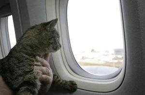 кошка в самолёте