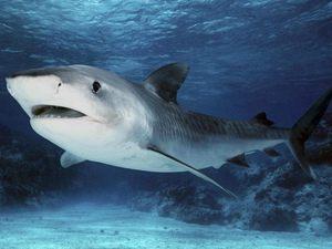 Характерное описание акул