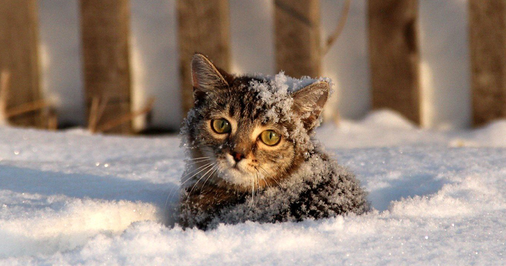 Выживают ли котята на улице