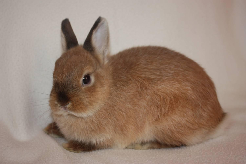 Выбор декоративных кроликов