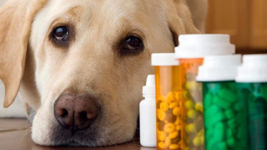 Дегельминтизация собак