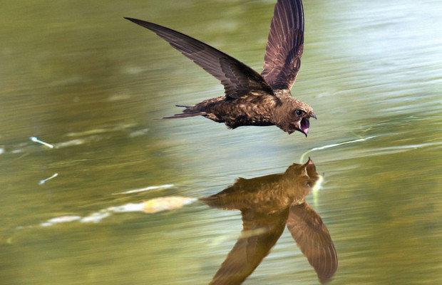 Скорость полета и продолжительность жизни