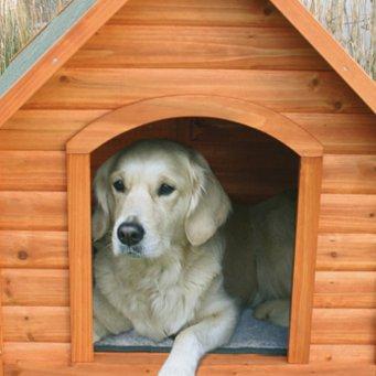 приучение к будке собаки