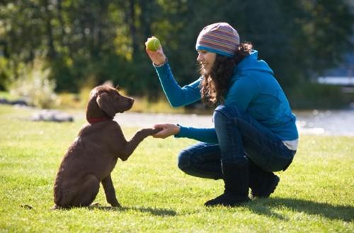 обучение пса командам