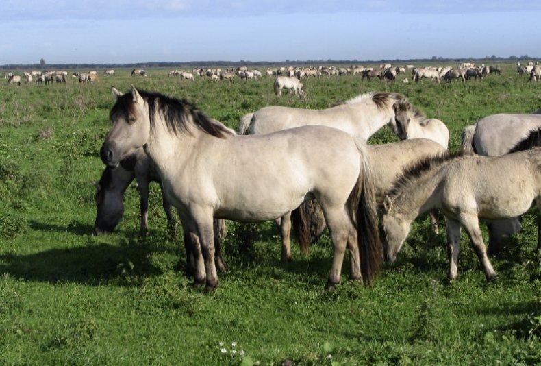 Дикие лошади на пастбище
