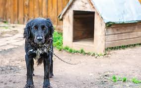 рекомендации по приучению собаки к будке