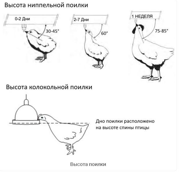 Как сделать оригинальную поилку для кур своими руками: размеры и варианты