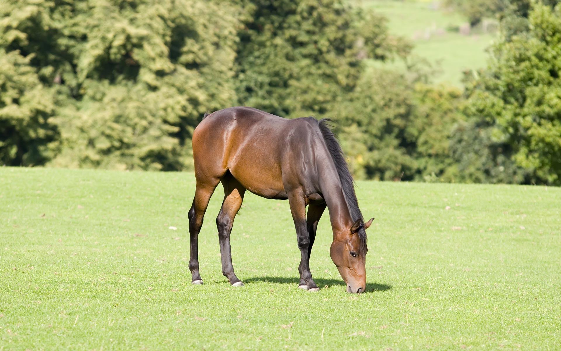 Вольный выпас и альтернативное кормление лошади