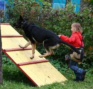 Правильная дрессировка собак