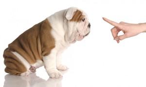 К каким манерам приучить собаку