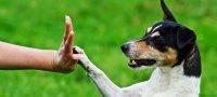 Основные команды для собак: как научить питомца слушаться?