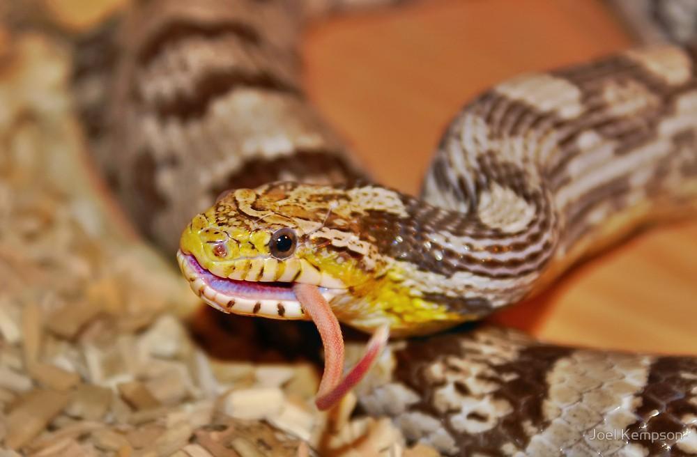 змея ест мышу