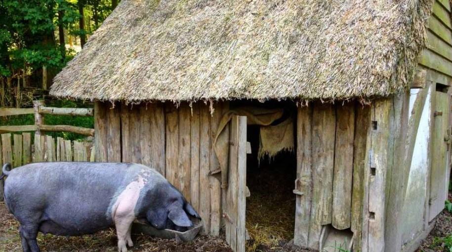 Свинарник должен быть теплым