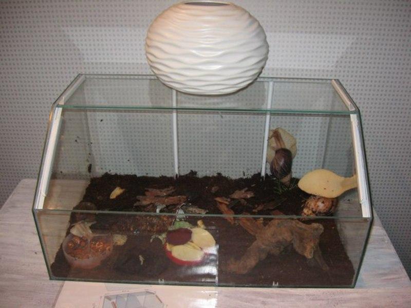 Домики для улиток ахатин