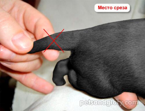 купирование хвостов у собак