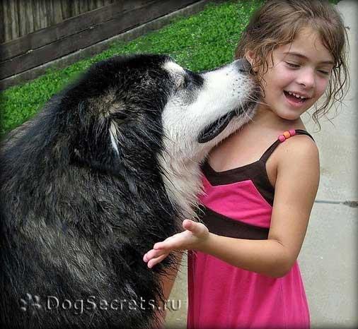Девочка с Аляскинским маламутом