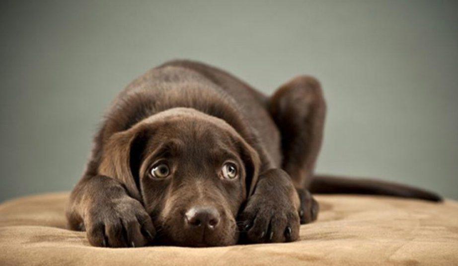 Напуганная собака