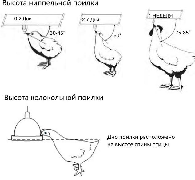 nippelnaya-poilka-dlya-kur_27