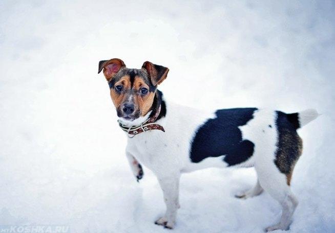 Собака зимой на белом снегу