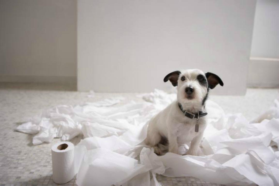 собака сидит на туалетной бумаге