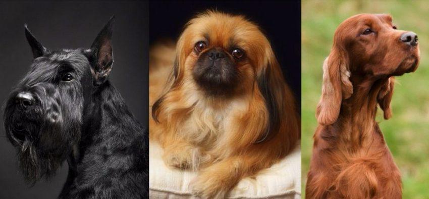 причины отита у собак